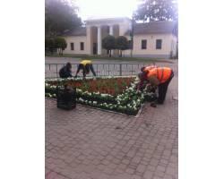 В рамках проведення   Всеукраїнської  акції   «За чисте довкілля»  в м. Чугуєві  роботи по озелененню  продовжуються