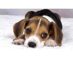 Інформація для населення міста про утримання домашніх тварин