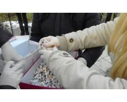 Юні чугуївці – за майбутнє міста без тютюнопаління!